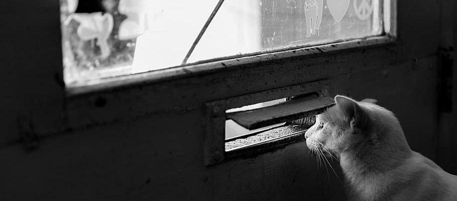 猫とオーガニック